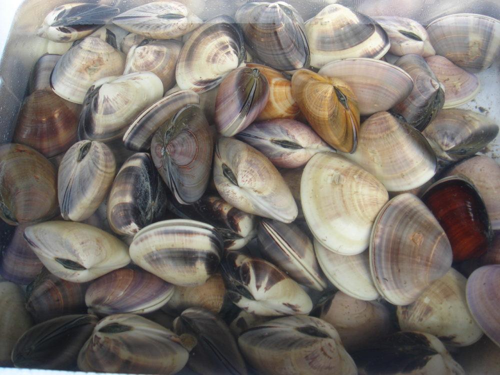 貝類も豊富です